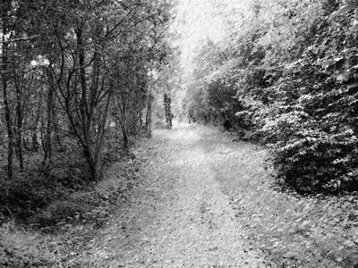 Mi camino