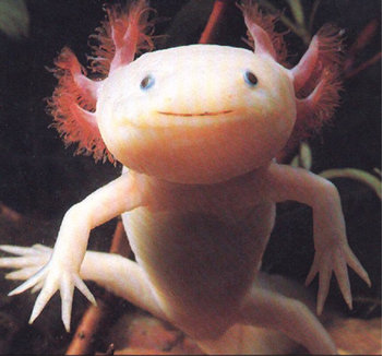 Axolotl - Julio Cortazar